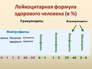 Сдвиги лейкоцитарной формулы