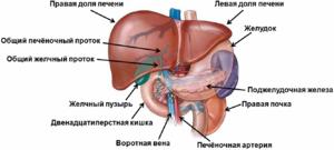 Какими препаратами лечат цирроз