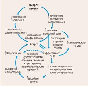 Симптомы цирроза печени у женщин: что важно знать, при профилактике и лечении