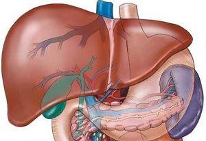 Лечение цирроза печени: классификация болезни, ее симптомы и препараты